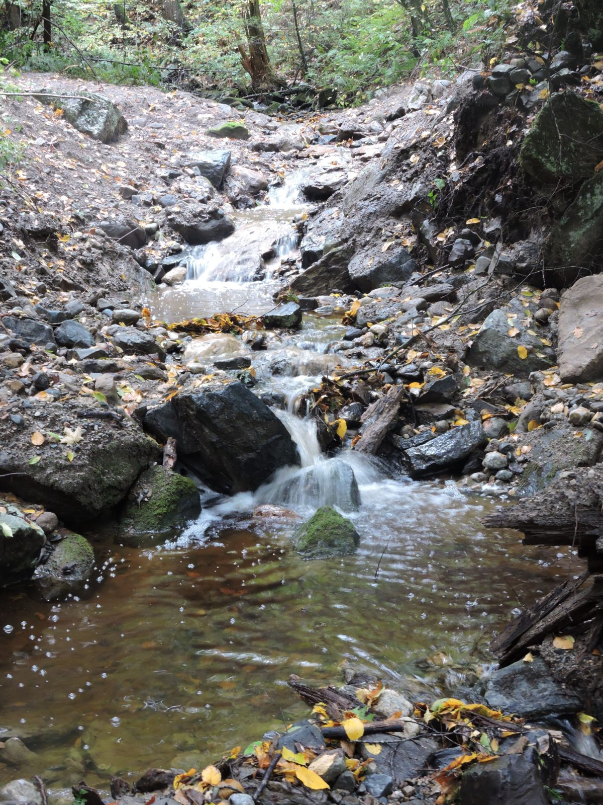 Culvert Removed for Native Brook Trout in Connecticut